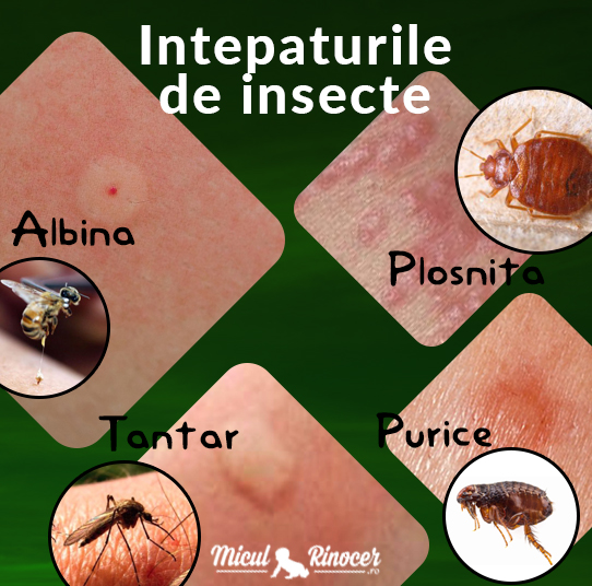Muscatura de furnica tratament