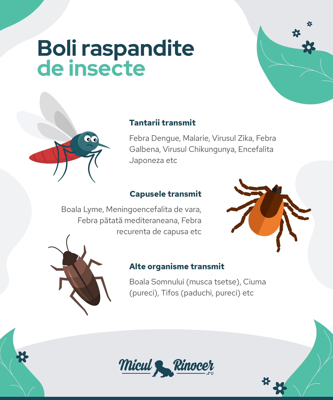 insecte împotriva lămâii paraziți de ferigă masculină