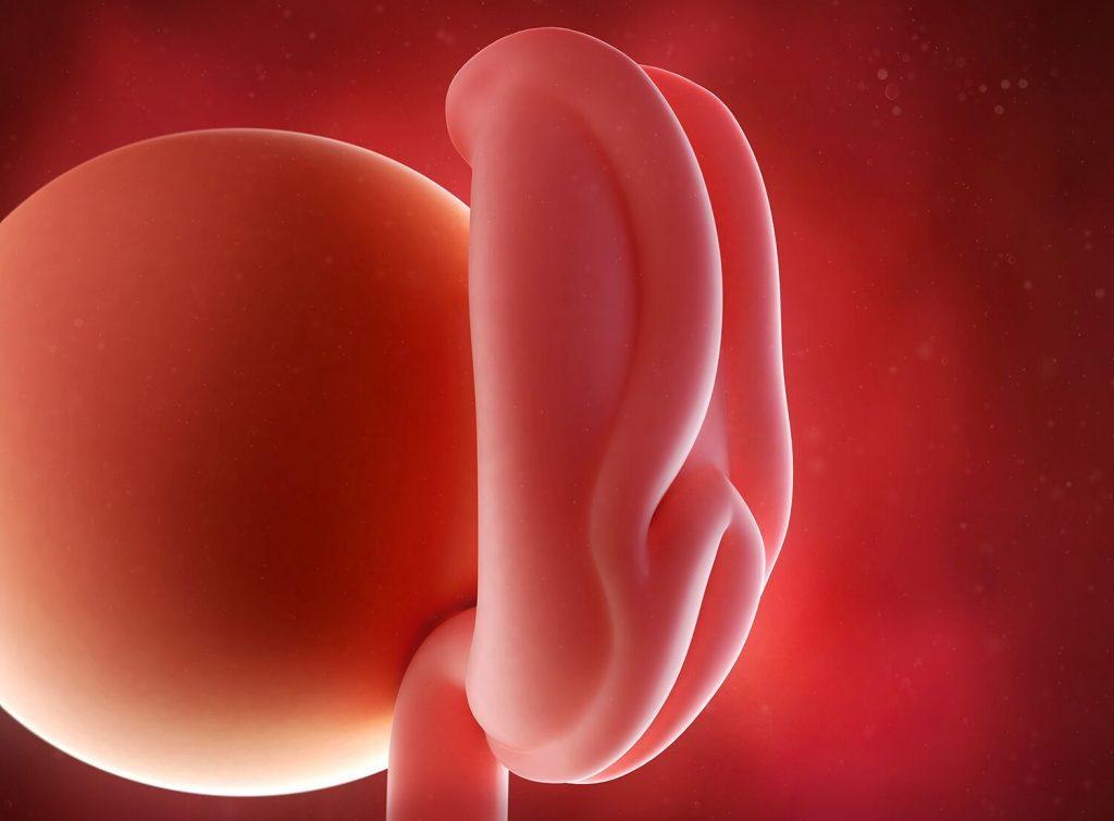 saptamana 3 de sarcina - saptamana 4 de sarcina - simptome de sarcina - prima luna de sarcina - MiculRinocer.ro
